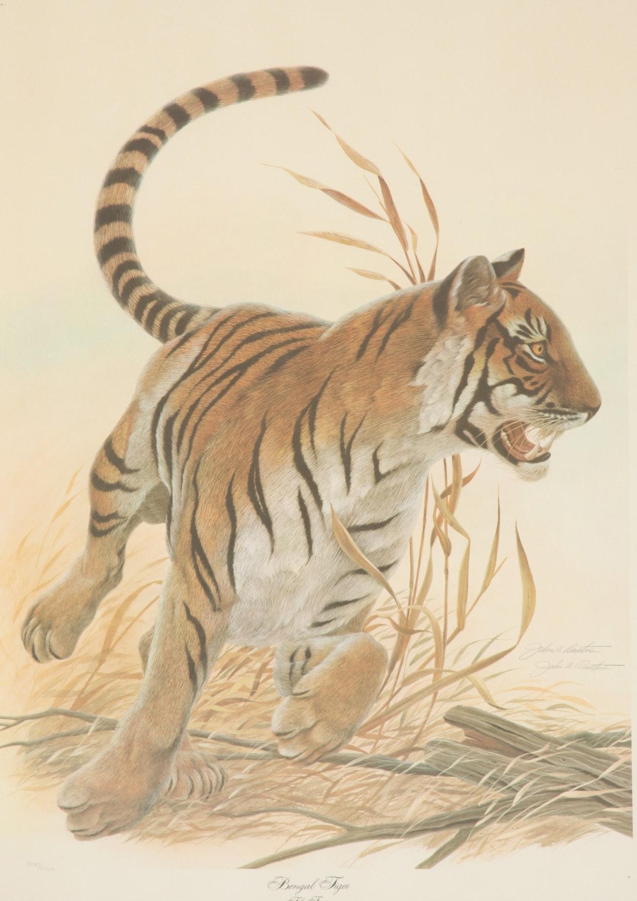 """John Ruthven """"Bengal Tiger"""""""