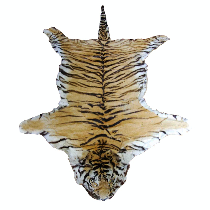 Genuine Indian Bengal Tiger Pelt Rug : EBTH