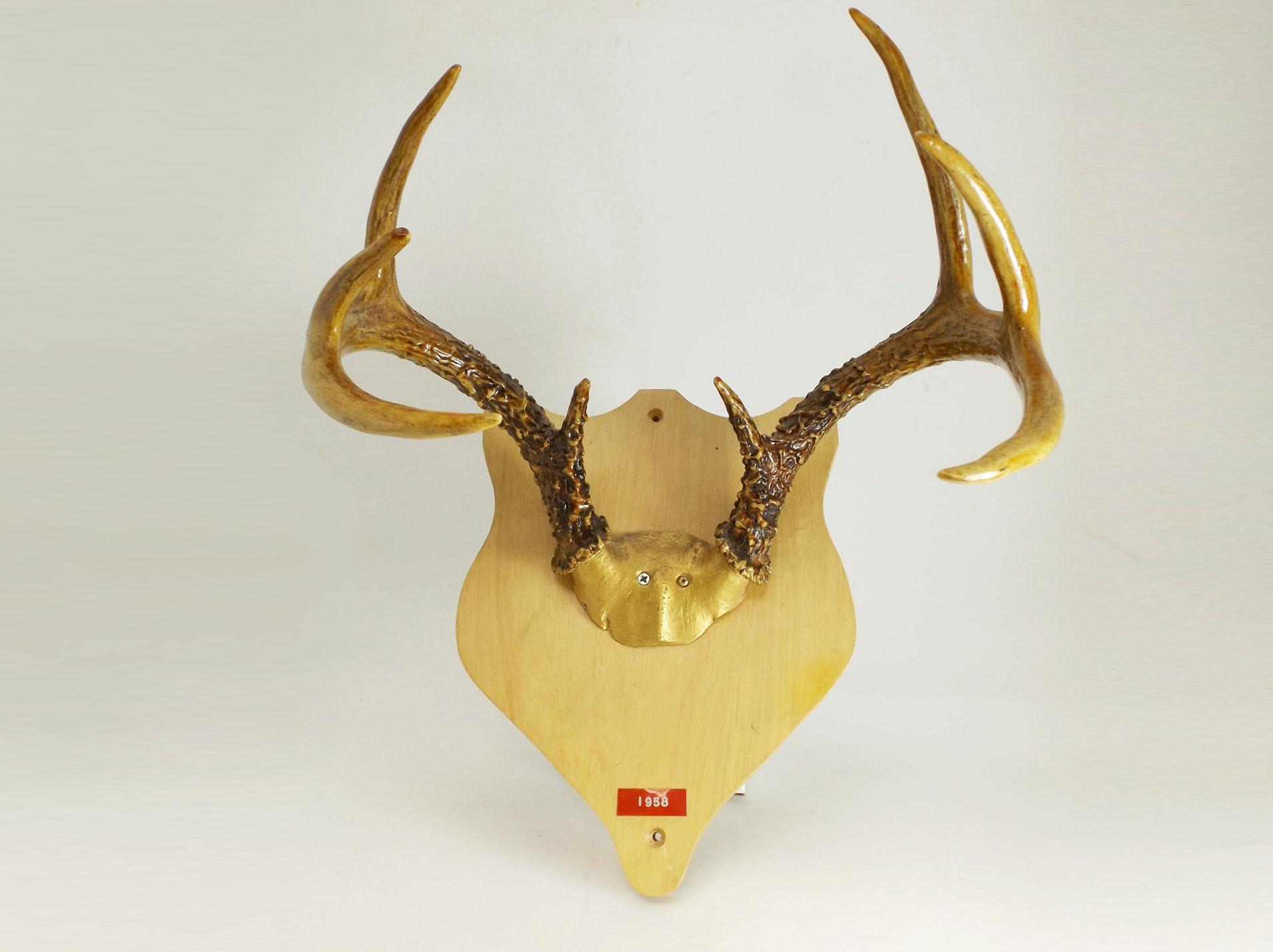 Gilded Deer Antler Deer Mount