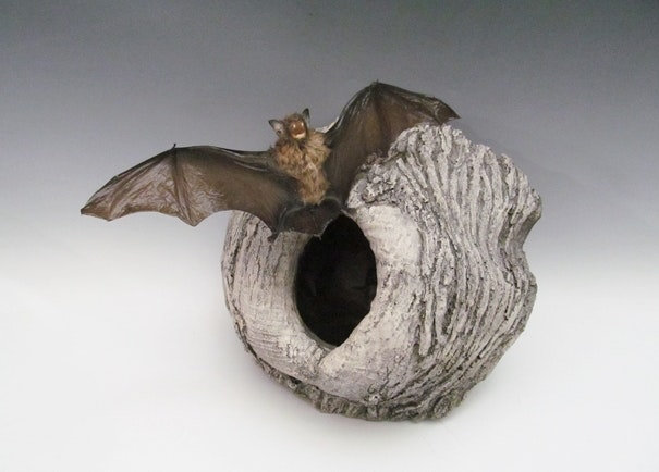 Bat Taxidermy Specimen