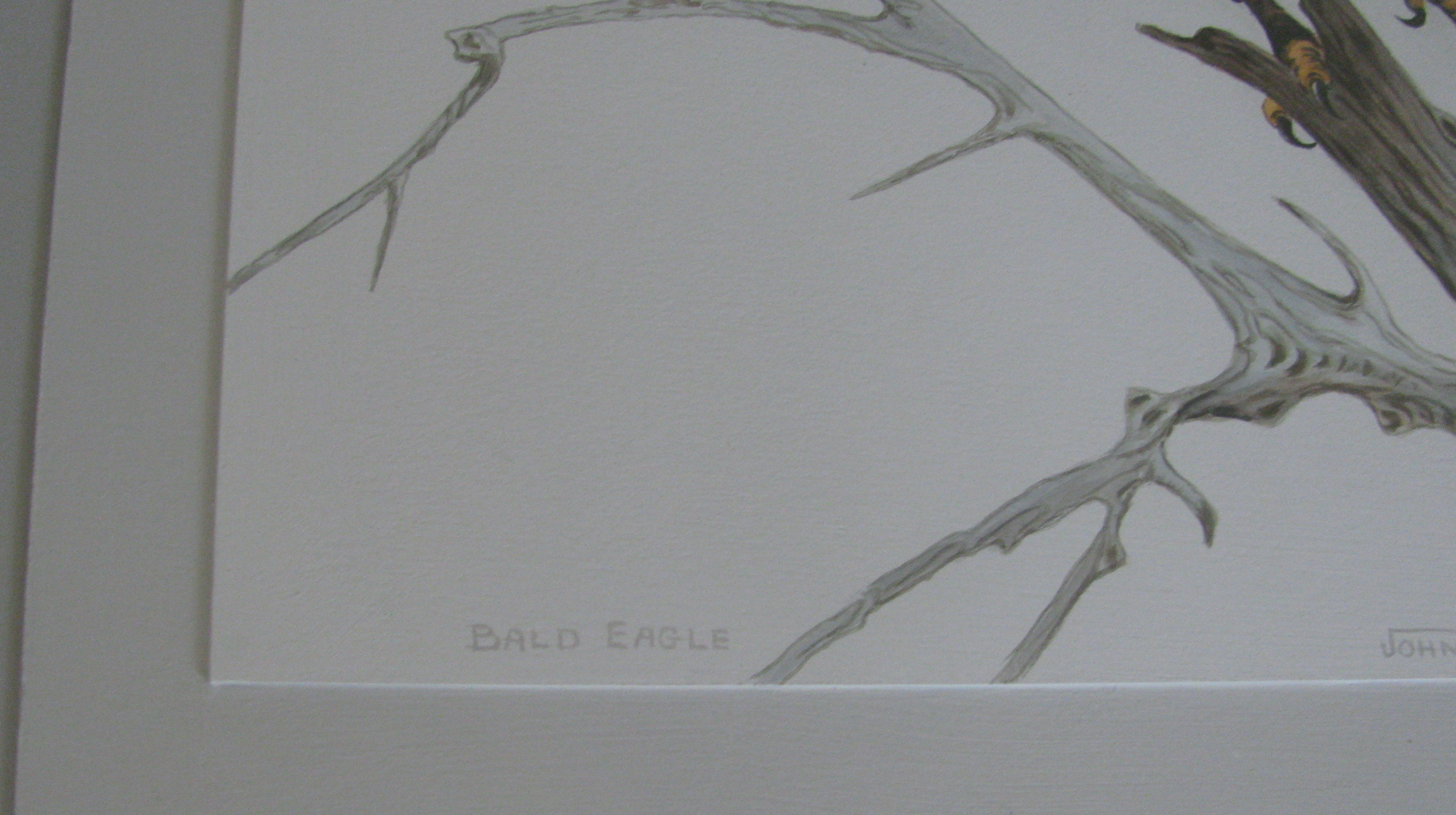 Framed Bald Eagle Print By John E Bradley Ebth
