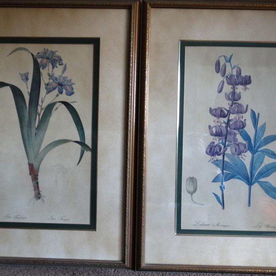 Bombay Company Framed Botanical Prints : EBTH