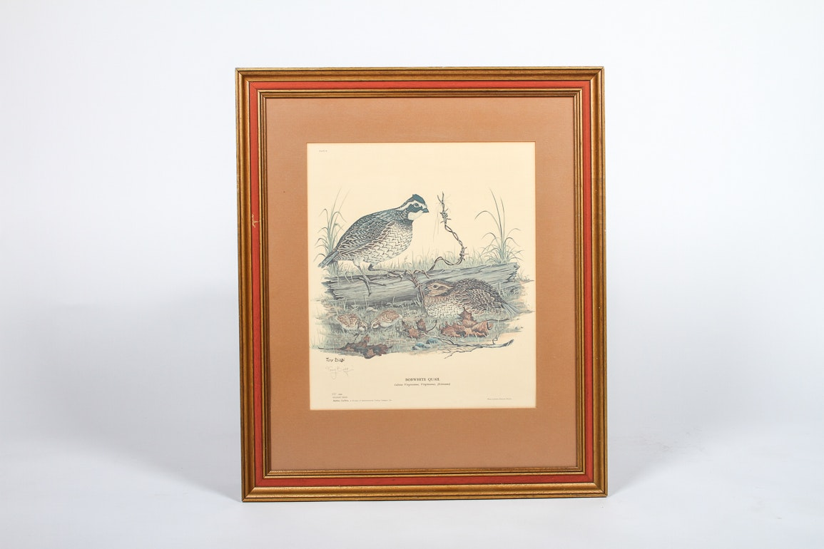 Signed And Numbered Tony Biagi Limited Edition Quail Print