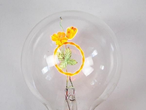 aerolux light bulb