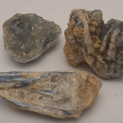 Crystal And Mineral Auctions Collectible Fossils For