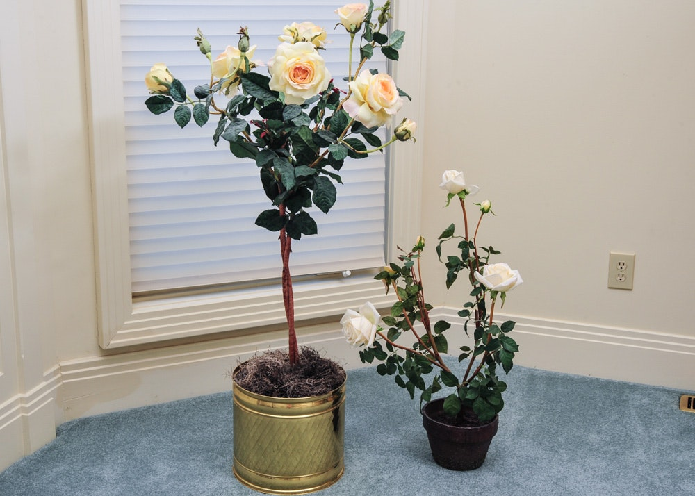 Yellow Rose Bushes For Sale
