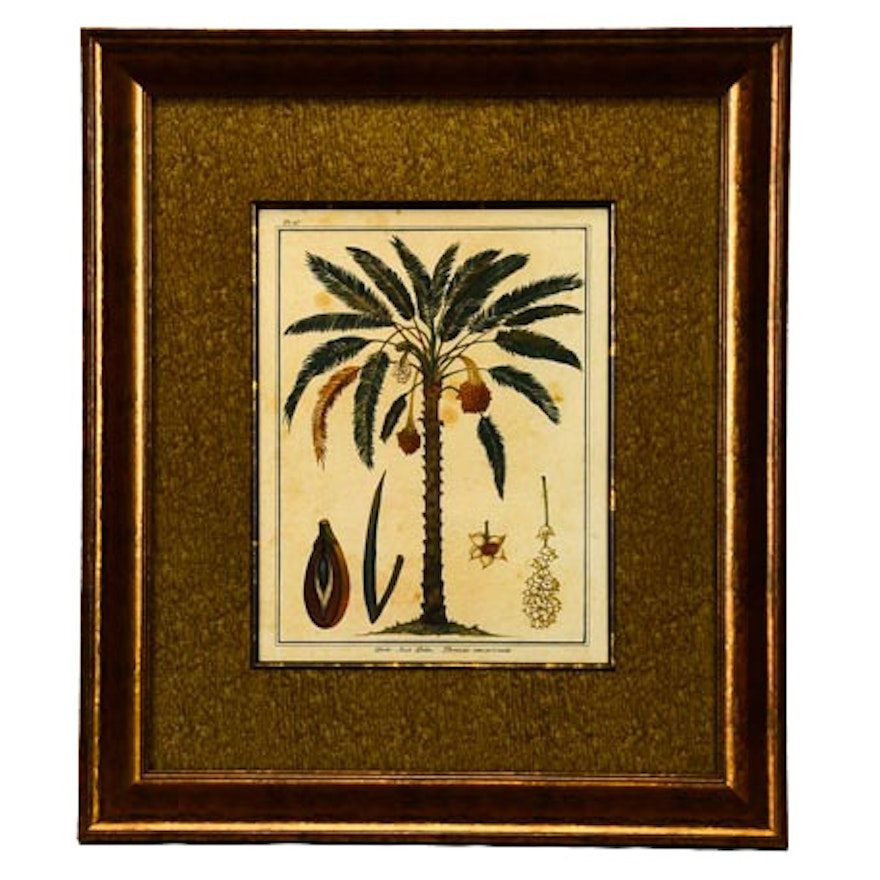 """Offset Lithograph of Rebecca Rice's """"Date Nut Palm"""""""