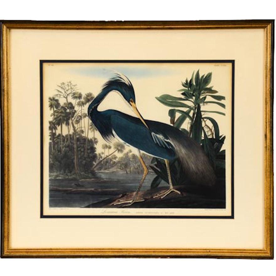 "Audubon Offset Lithograph ""Louisiana Heron"""