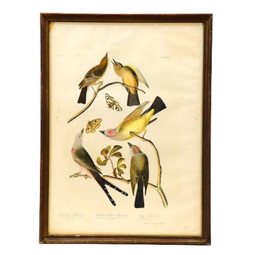 "1860 Chromolithograph of John Audubon ""Birds of America"" Drawing"