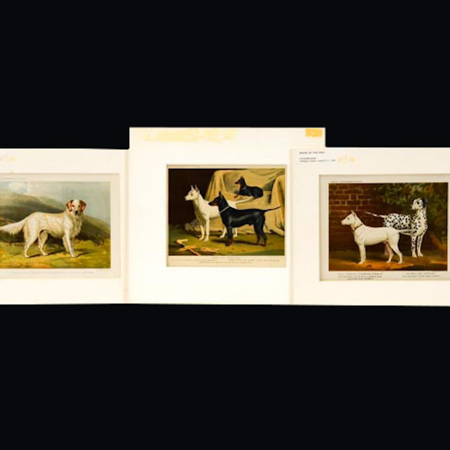 """Trio of Chromolithographs from """"The Illustrated Book of the Dog"""""""
