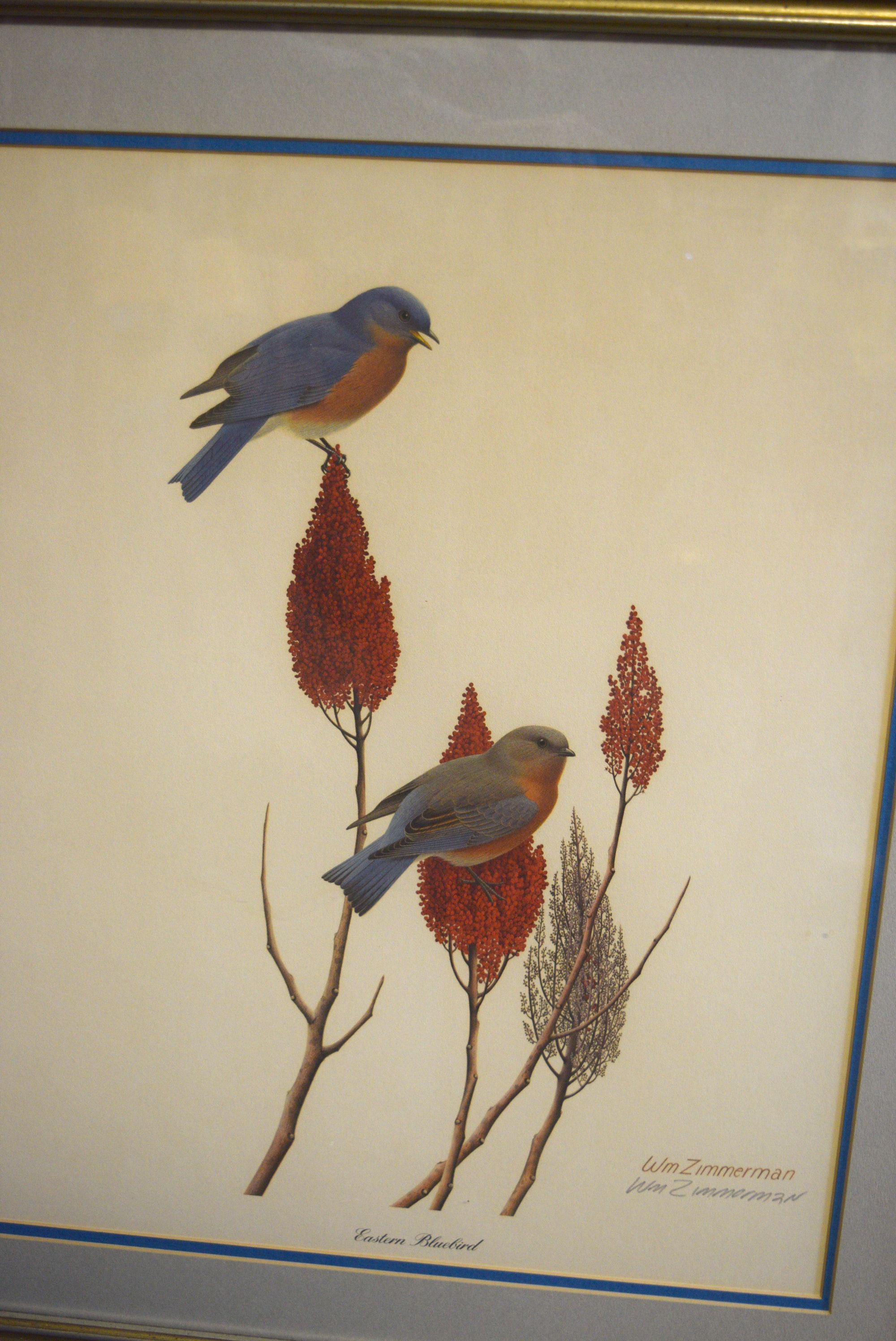 William Zimmerman Eastern Bluebird Lithograph Ebth