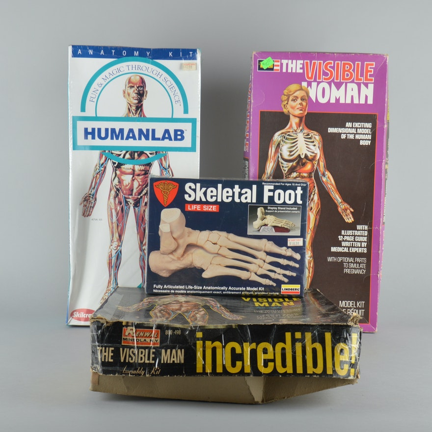 Vintage Toy Anatomy Kits : EBTH