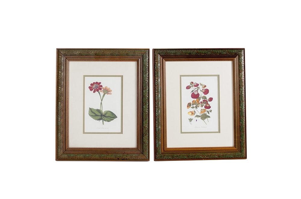 Pair Of Framed Botanical Prints Ebth