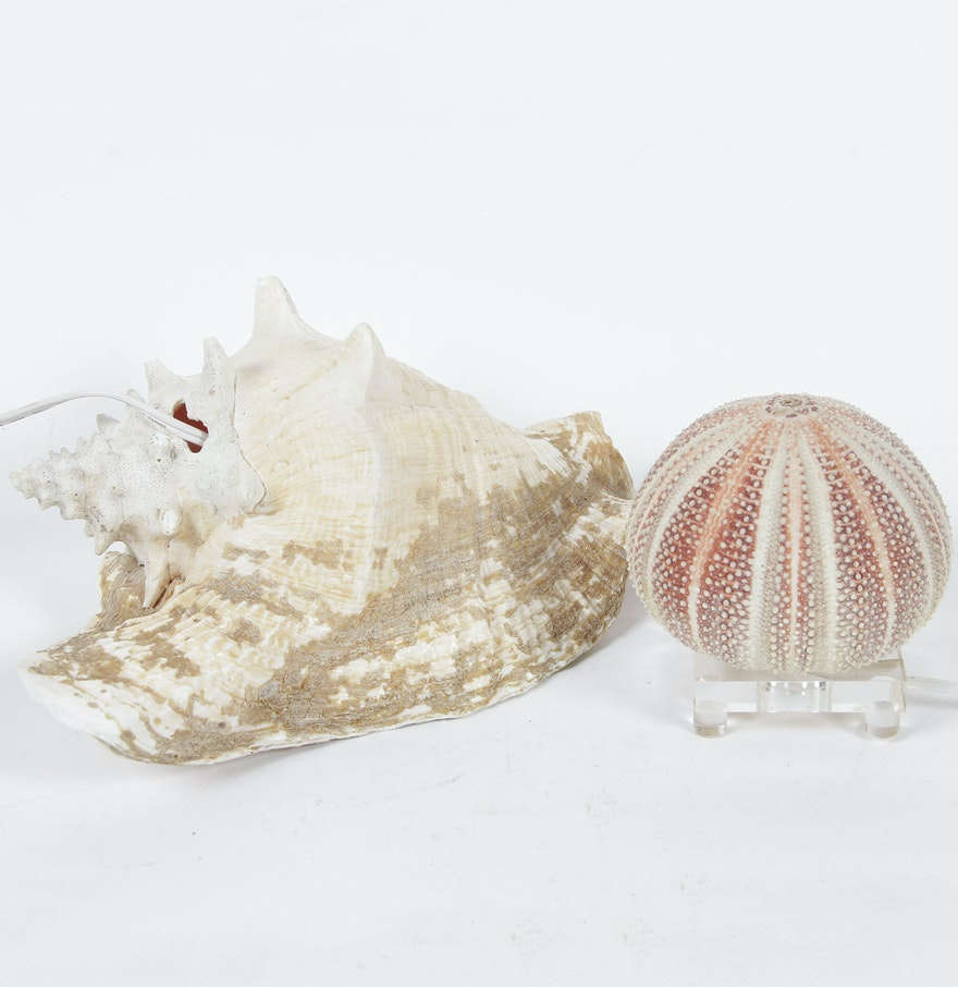 conch shell lamp and lucite base shell lamp ebth. Black Bedroom Furniture Sets. Home Design Ideas