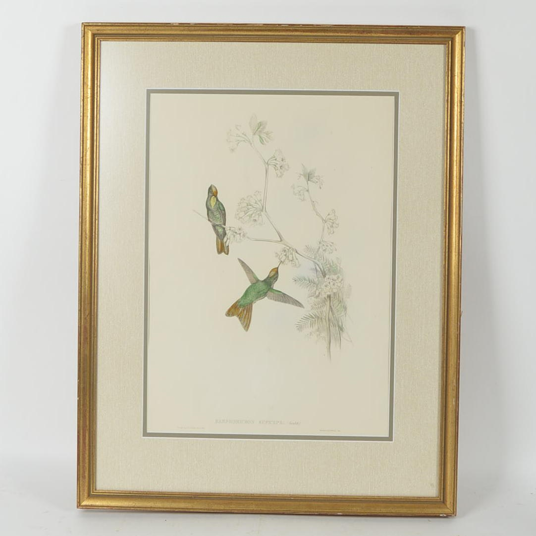 """Hummingbirds Hand Colored Framed Lithograph - John Gould and HC Richter, """"Red-capped Thorn-Bill"""""""