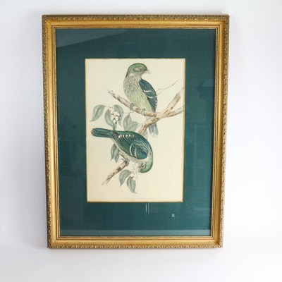 John Gould Framed Bird Print