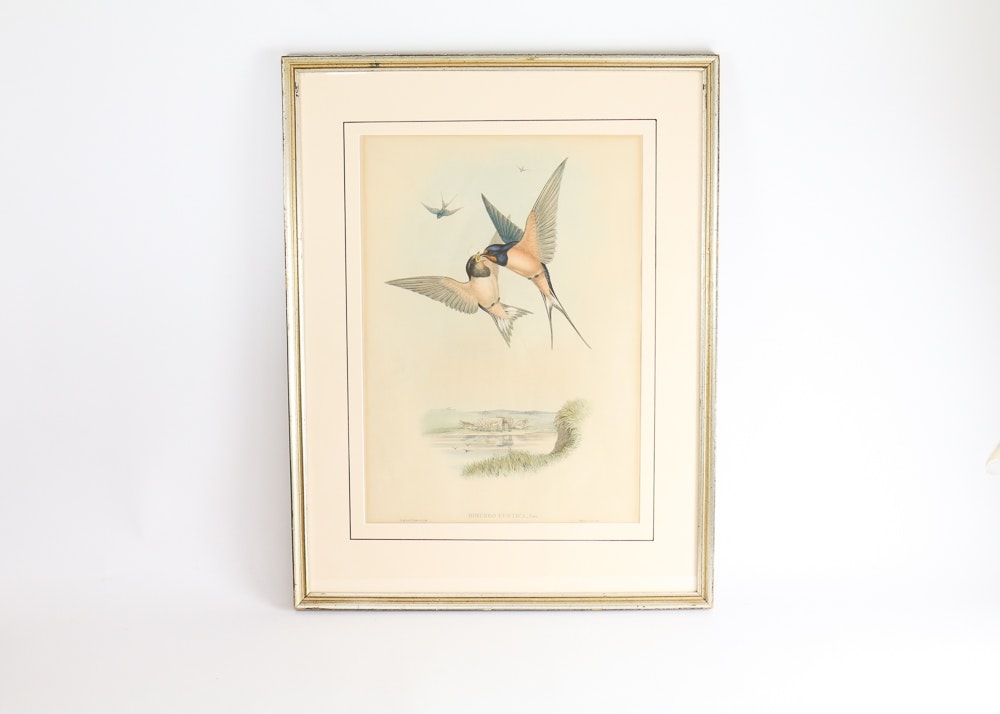 "Famed Lithograph of ""Hirundo Rustica"" after John Gould"