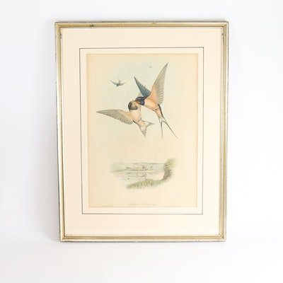 "Famed Lithograph of ""Hirundo Rustica"" after John Gould"