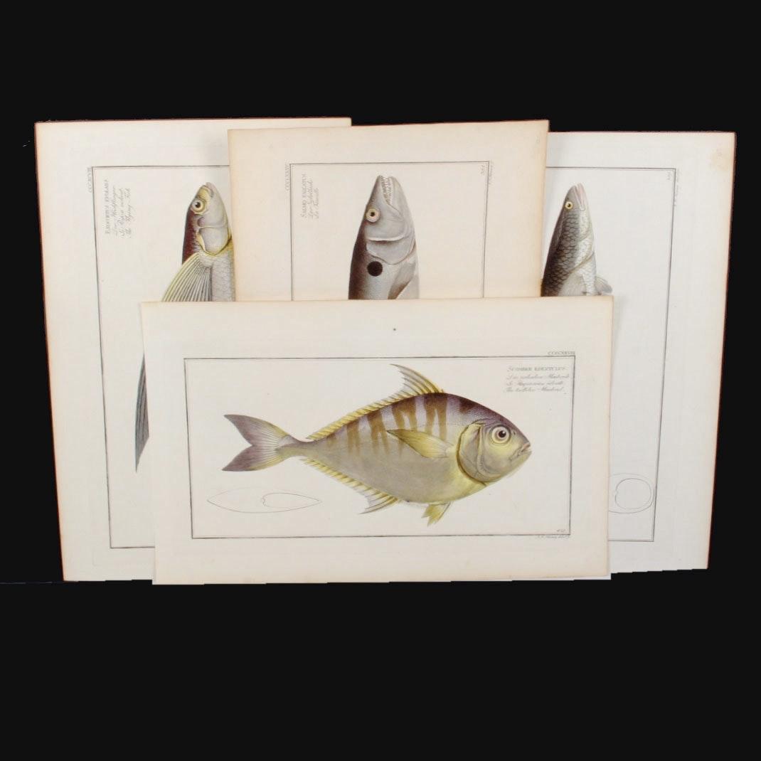 Set of Four Dr. Marcus Bloch's Antique Fish Engravings