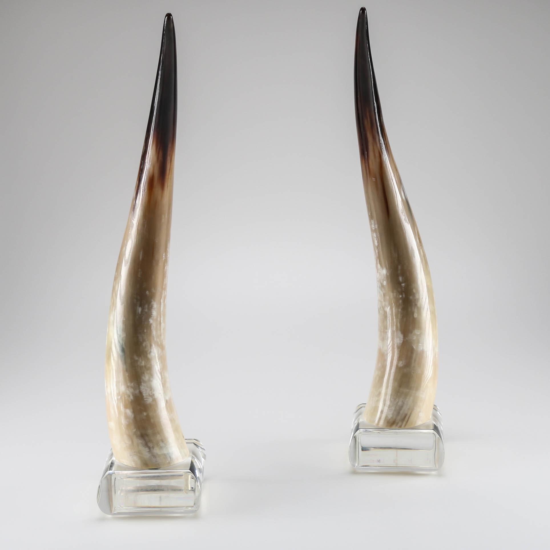 Longhorn Steer Horns on Lucite