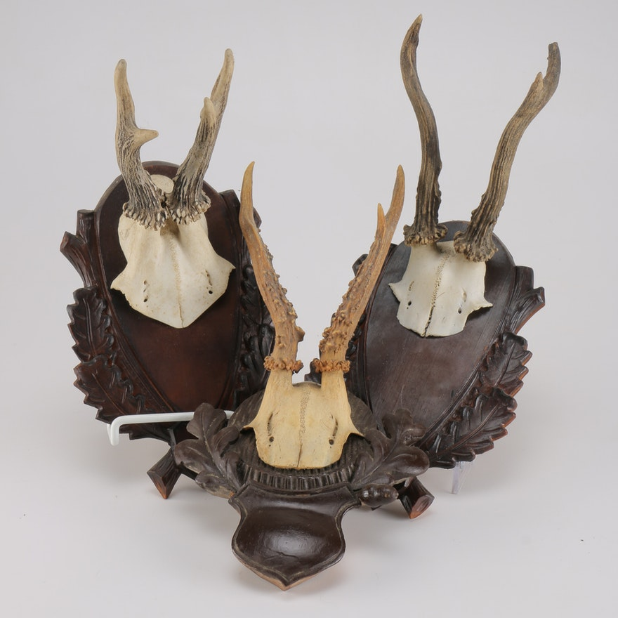 Antlers With Carved Frames : EBTH
