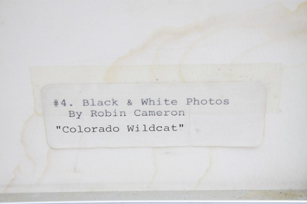 Robin Cameron Signed Photograph Quot Colorado Wildcat Quot Ebth