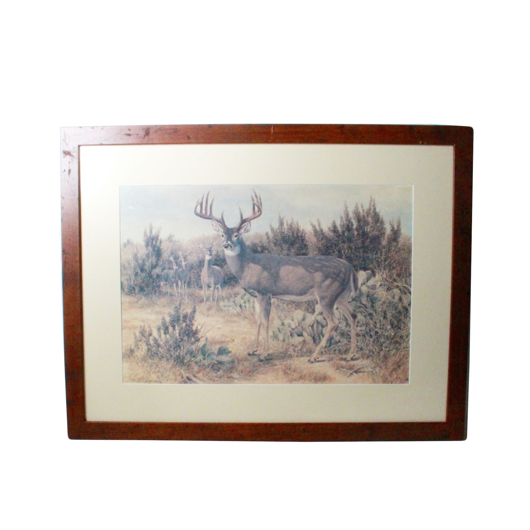 Tom Beecham Quot Mule Deer On Rim Of Grand Canyon Quot Print Ebth
