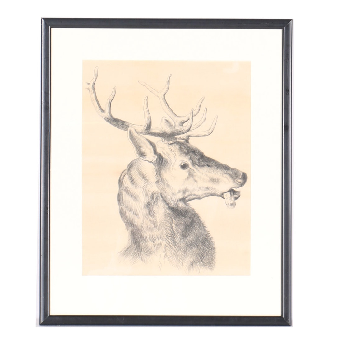 Emily B. Waite Charcoal Drawing of a Deer