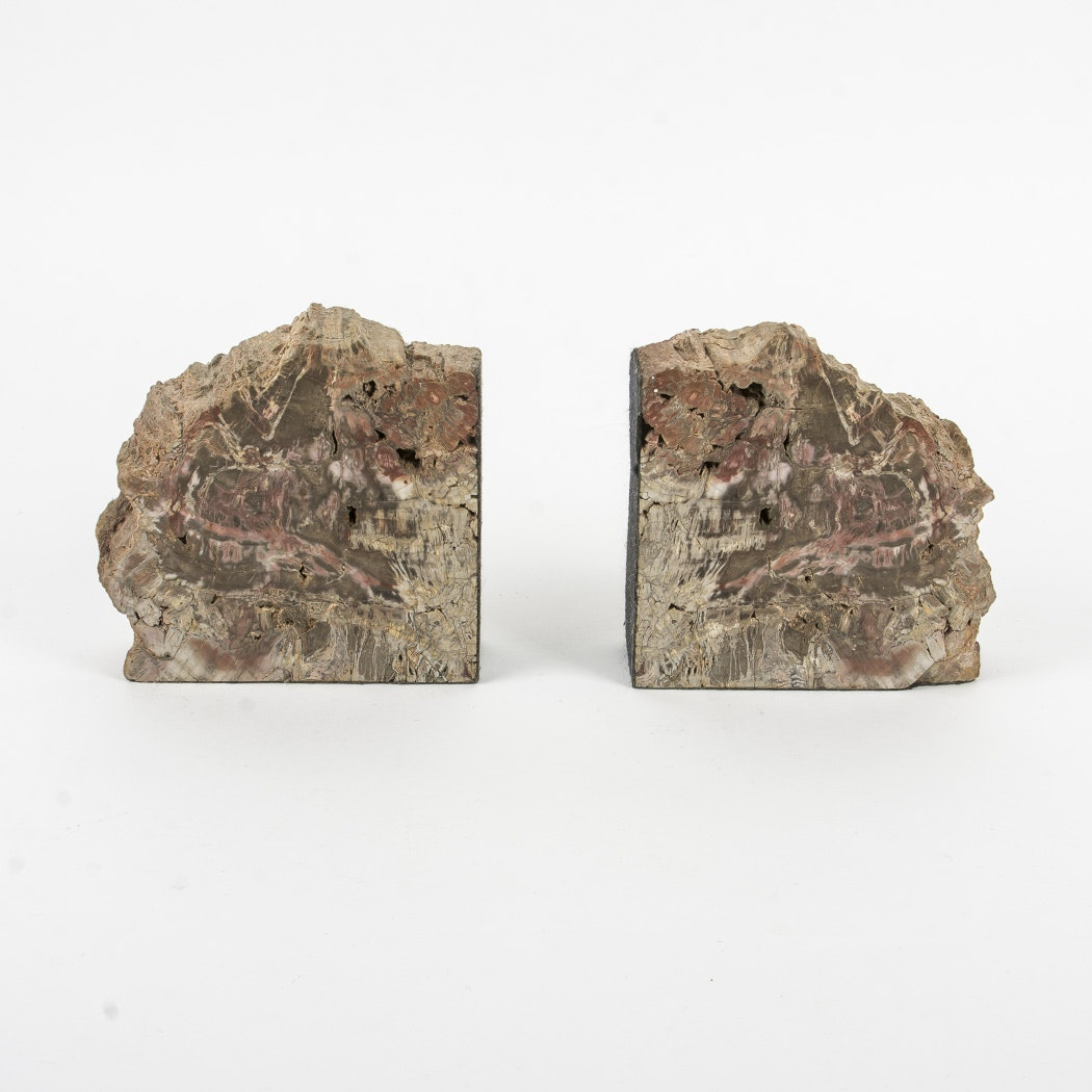 Set of Fossil Bookends