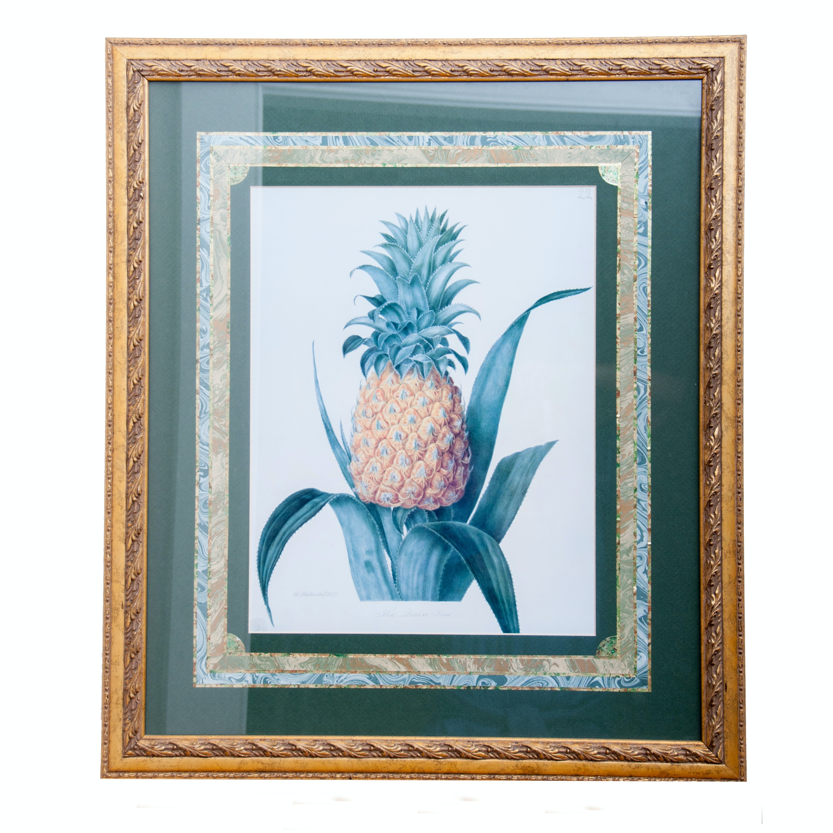 """Framed Print After a Watercolor, """"The Queen Pine"""""""