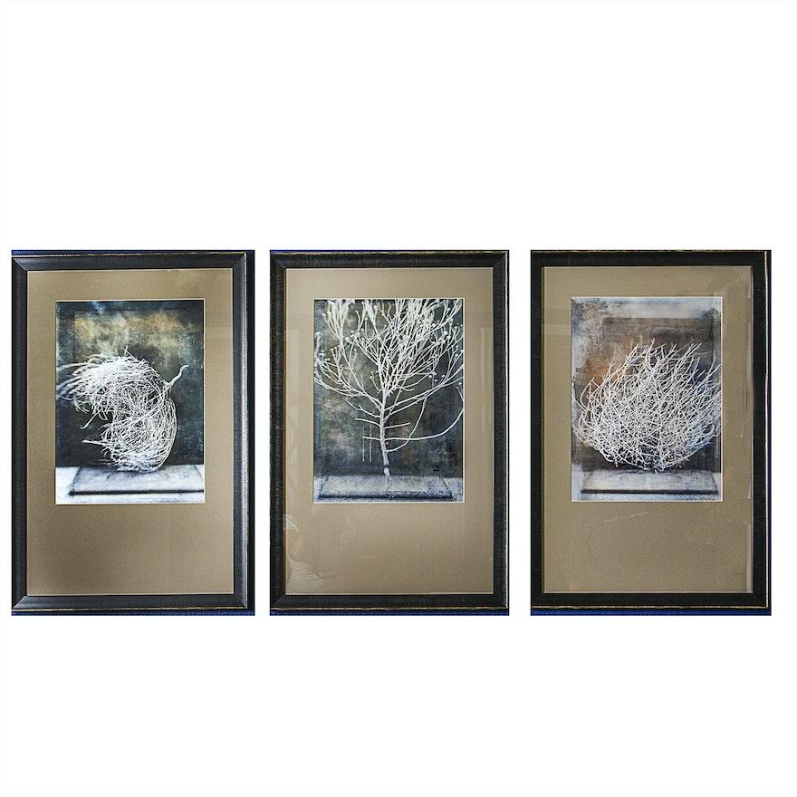 Set of Three Framed Prints \