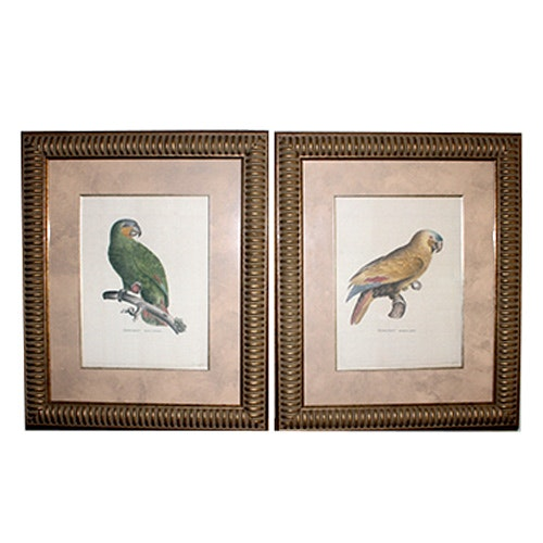 Offset Lithographs of Parrots