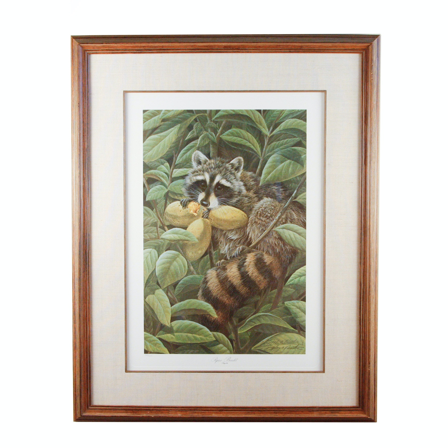 "John A. Ruthven Limited Edition Offset Lithograph ""Papaw Bandit"""