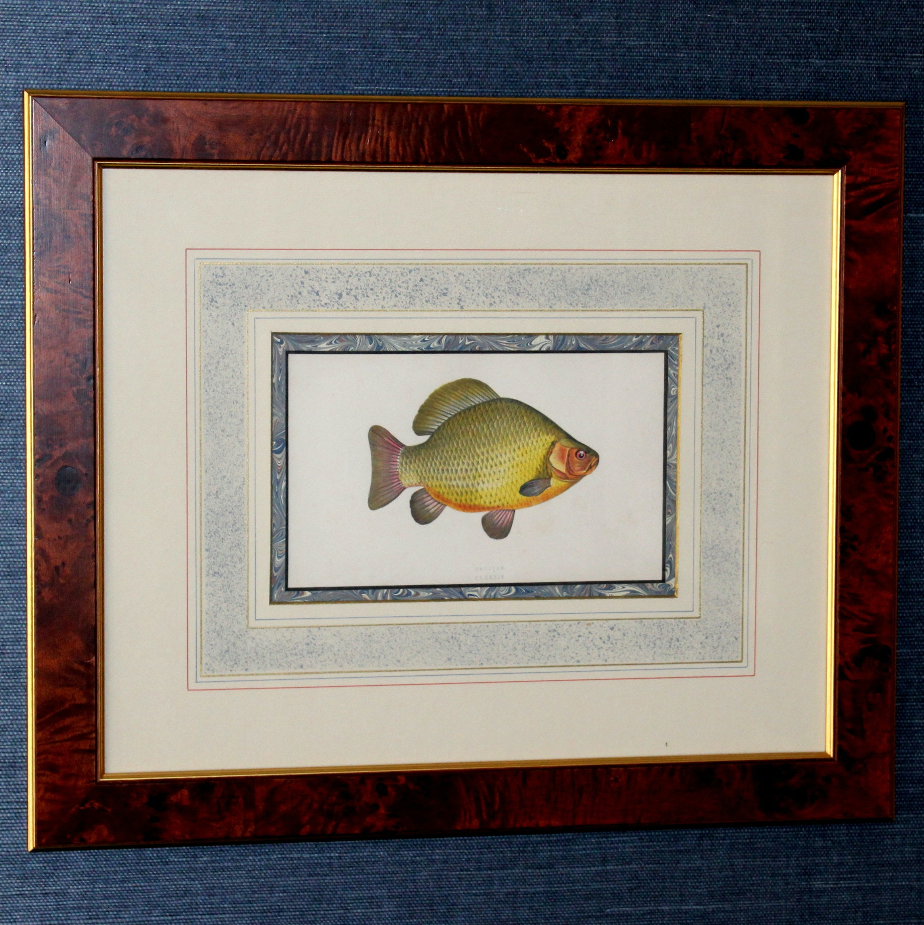 Antique Lithograph of Crucian Carp