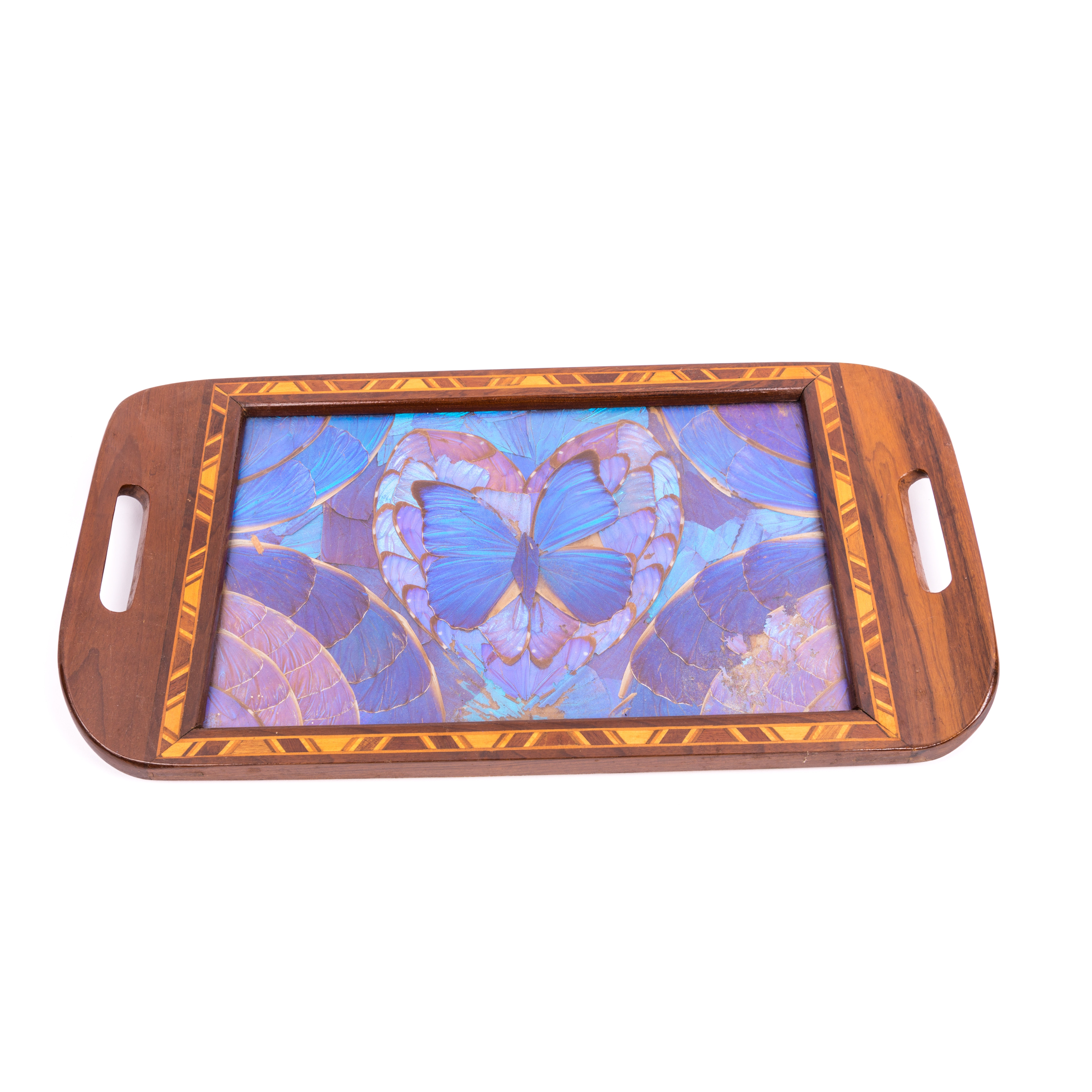 Morpho Butterfly Wing Tray
