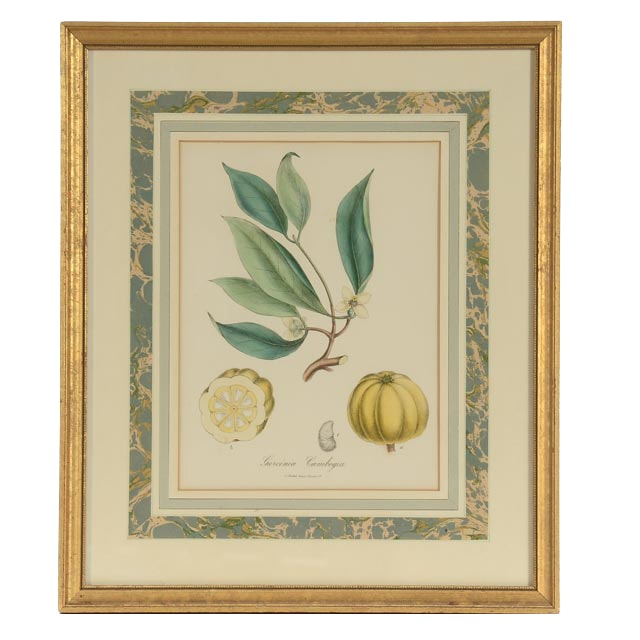 "Antique Hand-colored Lithograph Bookplate ""Garcinia Cambogia"""