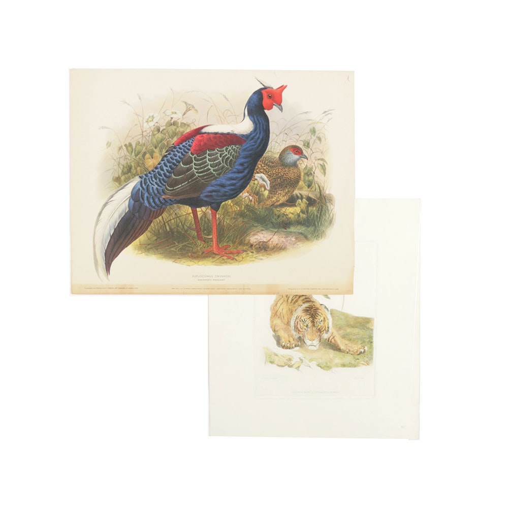 Engraving and Lithograph of Pheasants and a Tiger