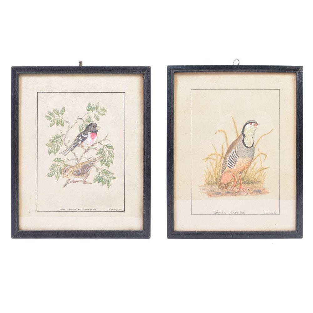 "Alaric P. Lesage Ornithological Drawings ""Rose-Breasted Grosbeak"" and ""Chukar Partridge"""