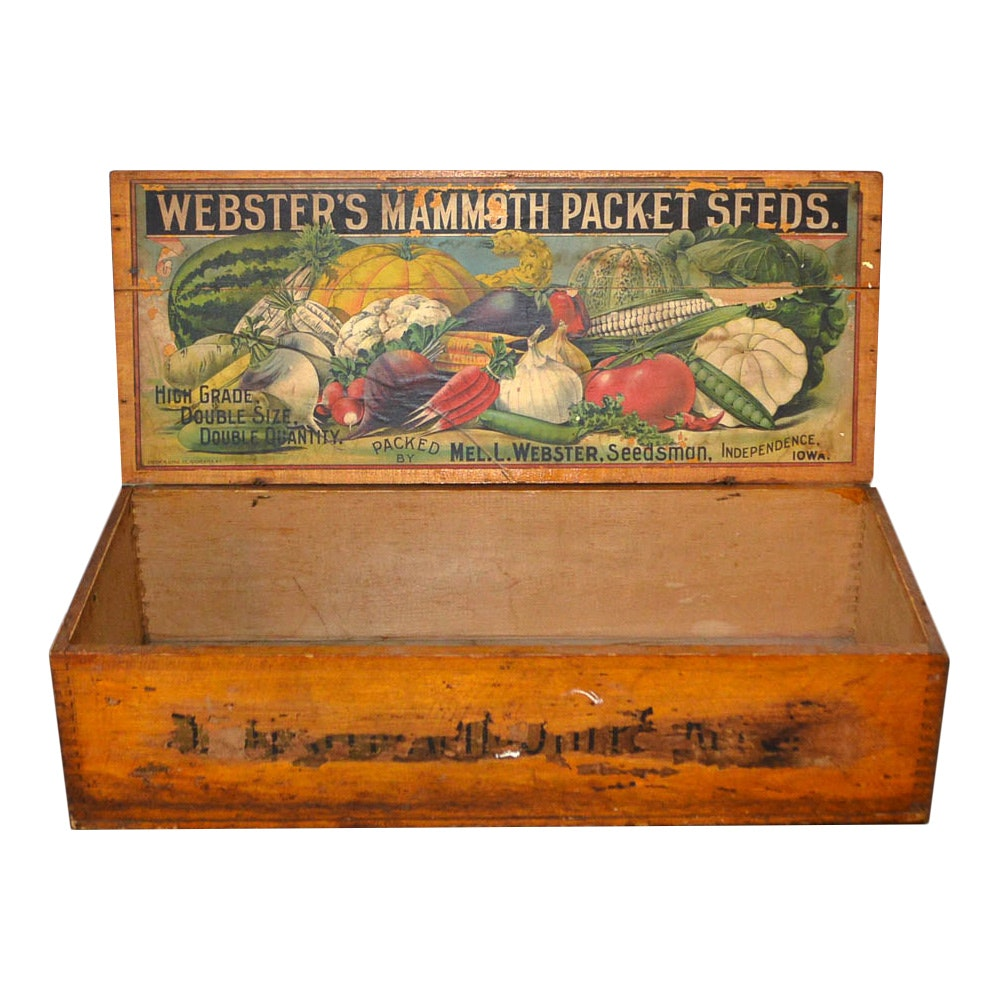 Vintage Webster's Mammoth Seed Counter Display Box