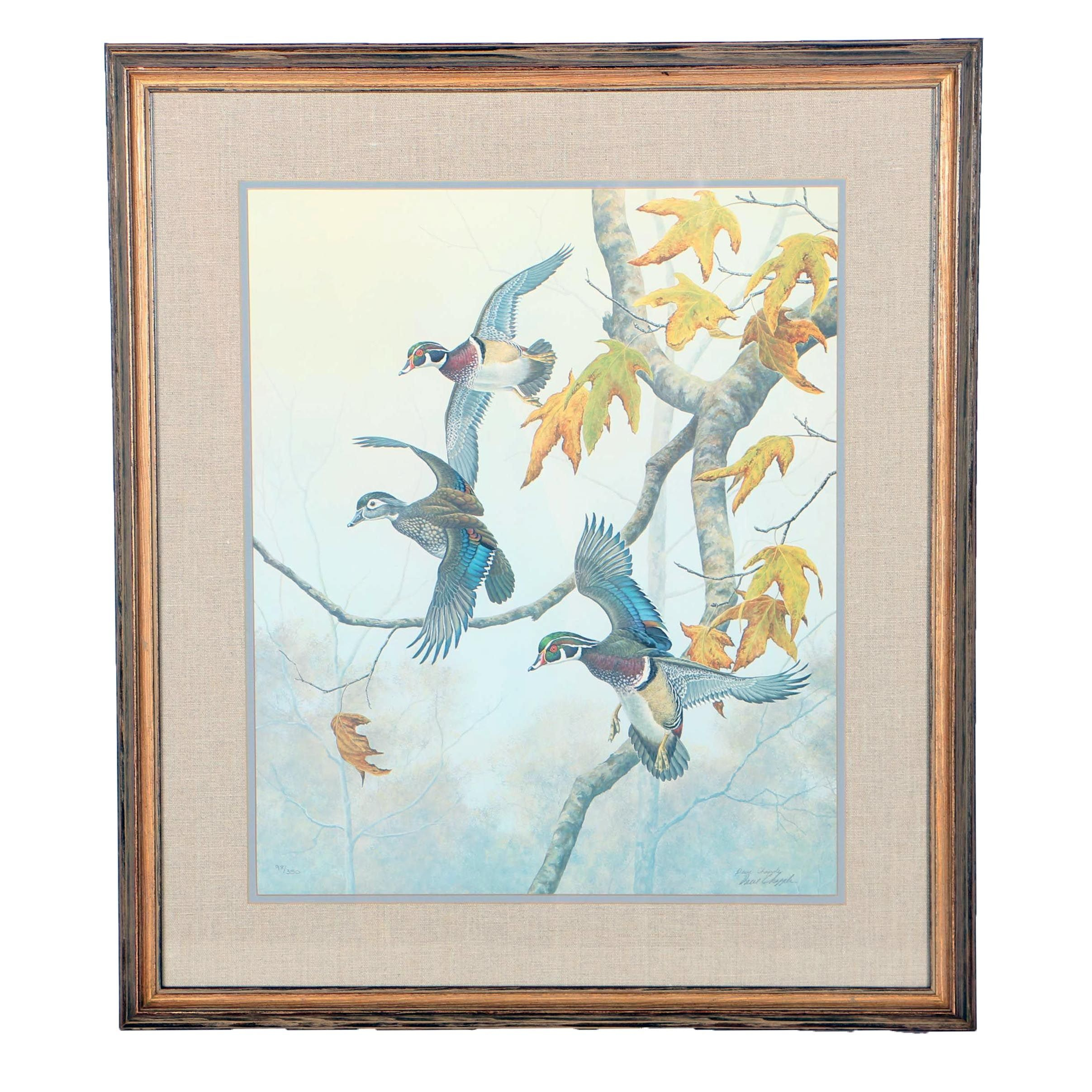 Dave Chapple Limited Edition Offset Lithograph of Ducks Descending