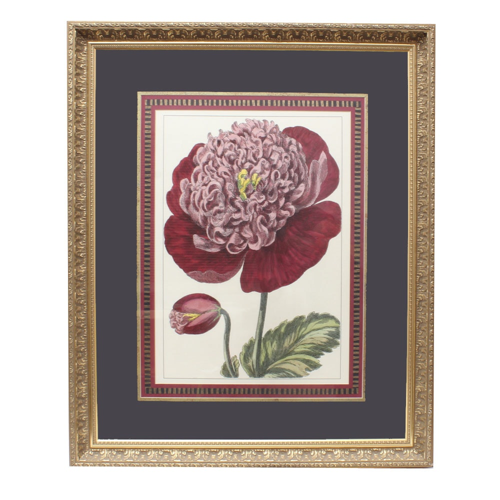 Framed Offset Lithograph of a Red Flower