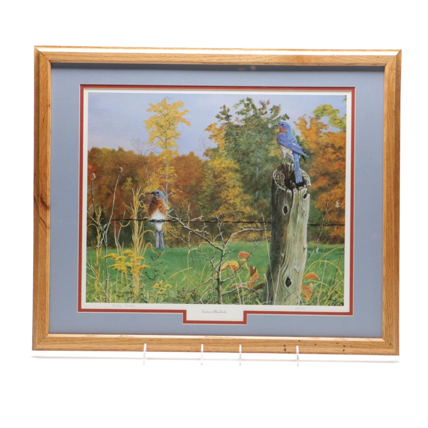"""Phillip Powell Limited Edition Offset Lithograph """"Eastern Bluebirds"""""""