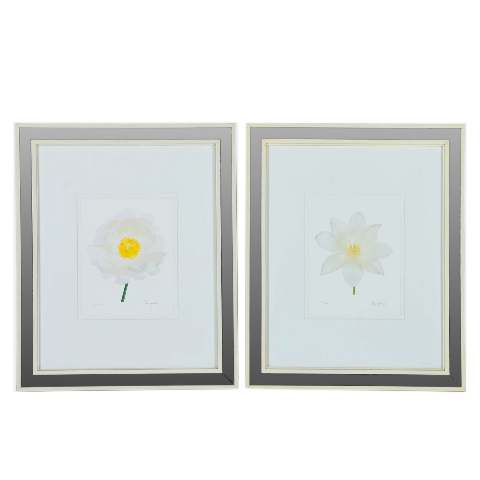 Peter Arnold Limited Edition Giclée Prints of White Flowers