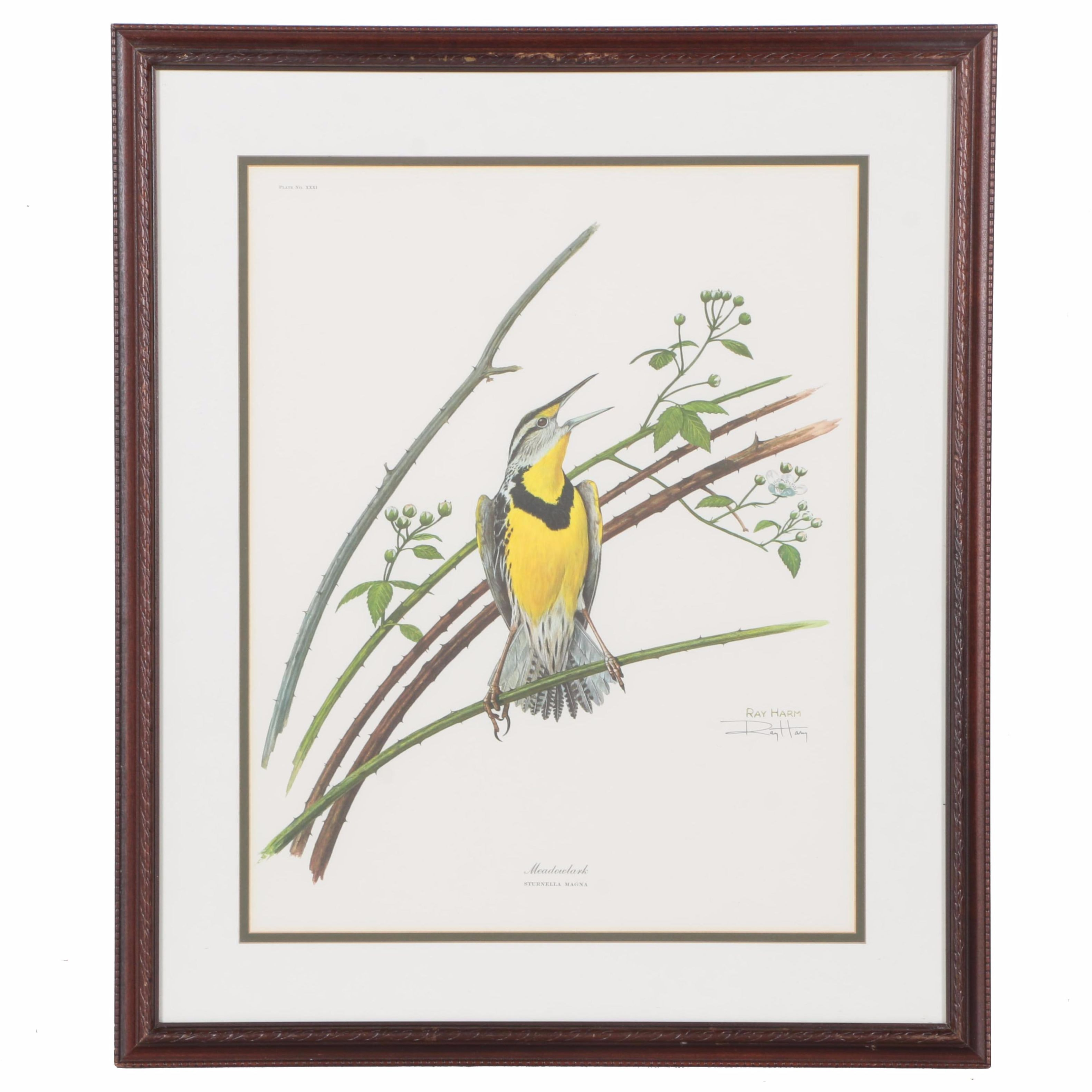 "After Ray Harm Offset Lithograph ""Meadowlark"""