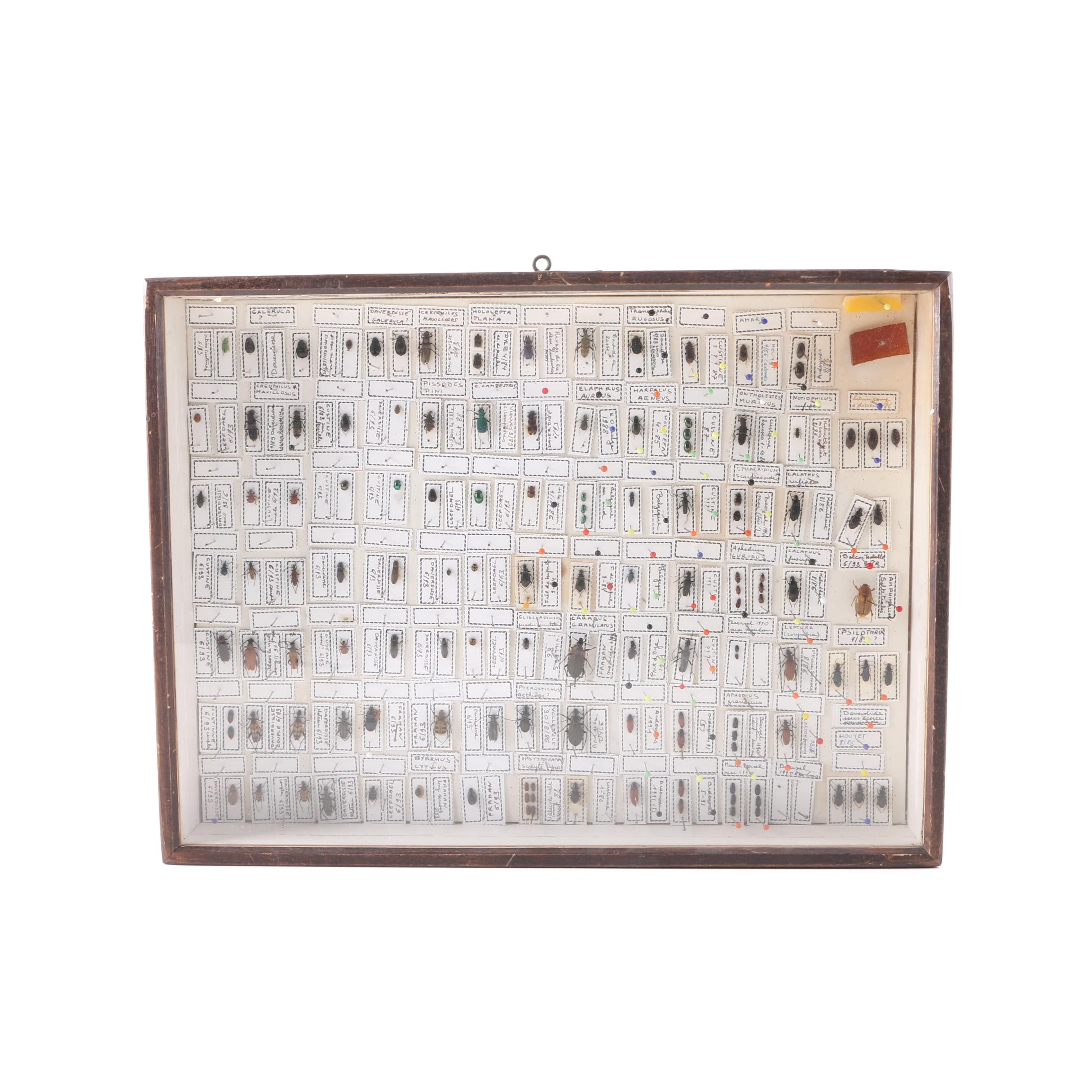 Framed Entomology Collection