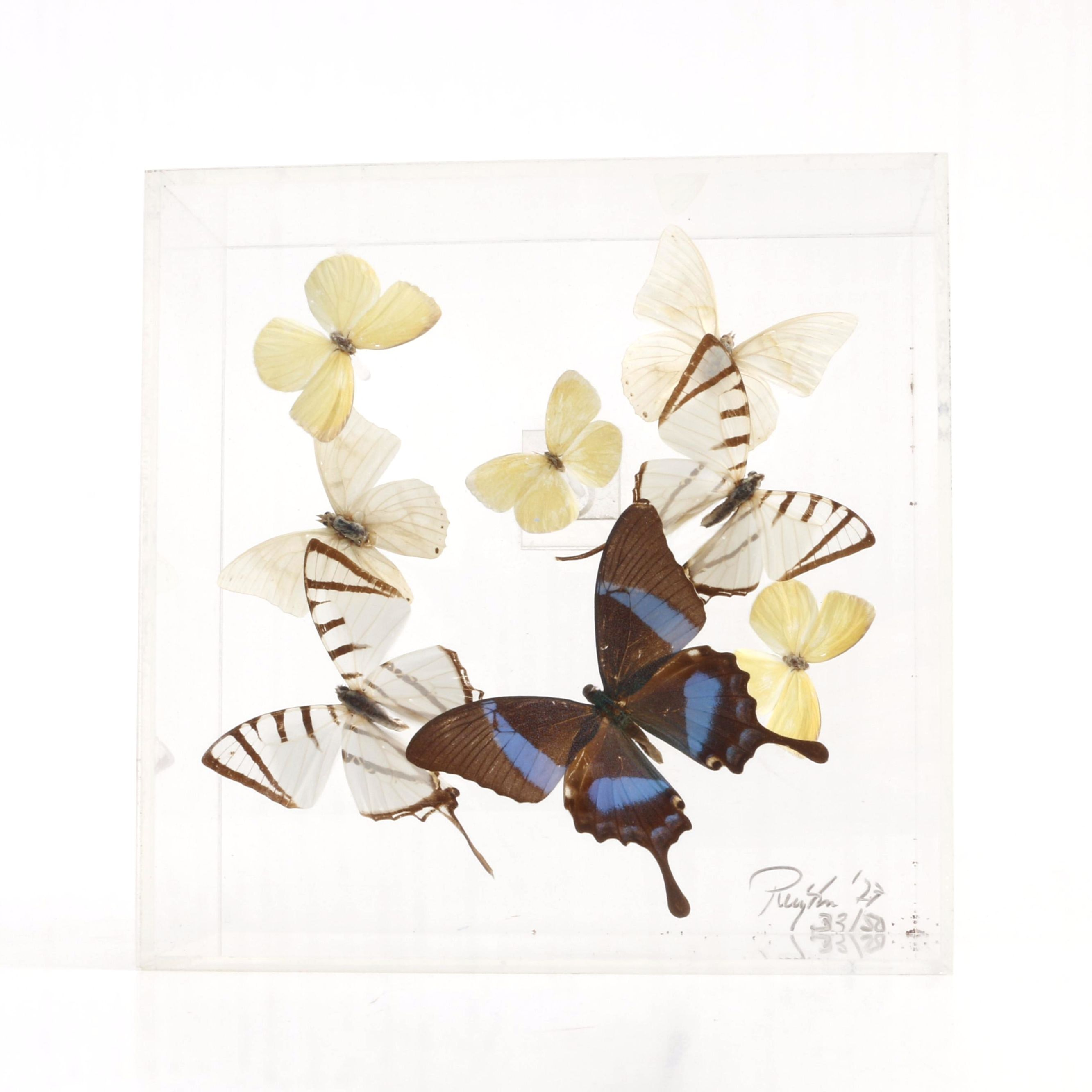 Limited Edition Framed Butterflies