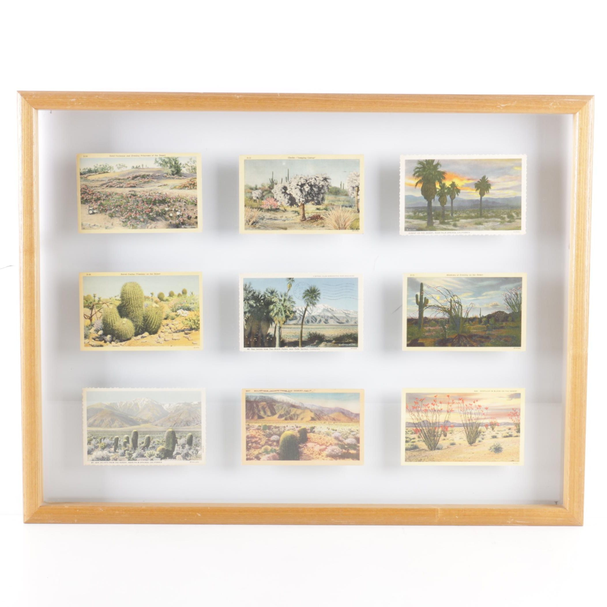 Circa 1940s Mounted Postcards of the California Deserts