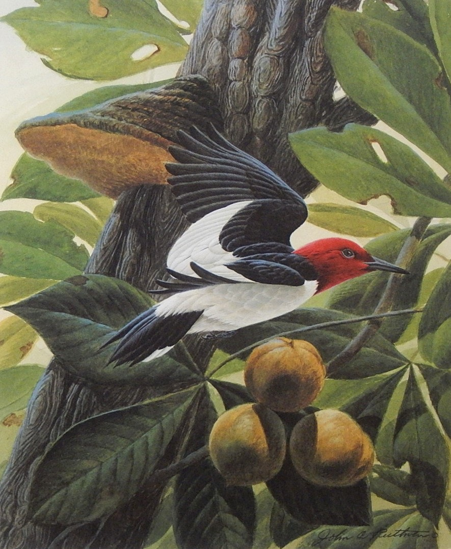 "John Ruthven Signed Limited Edition Offset Lithograph ""Red Headed Woodpecker"""