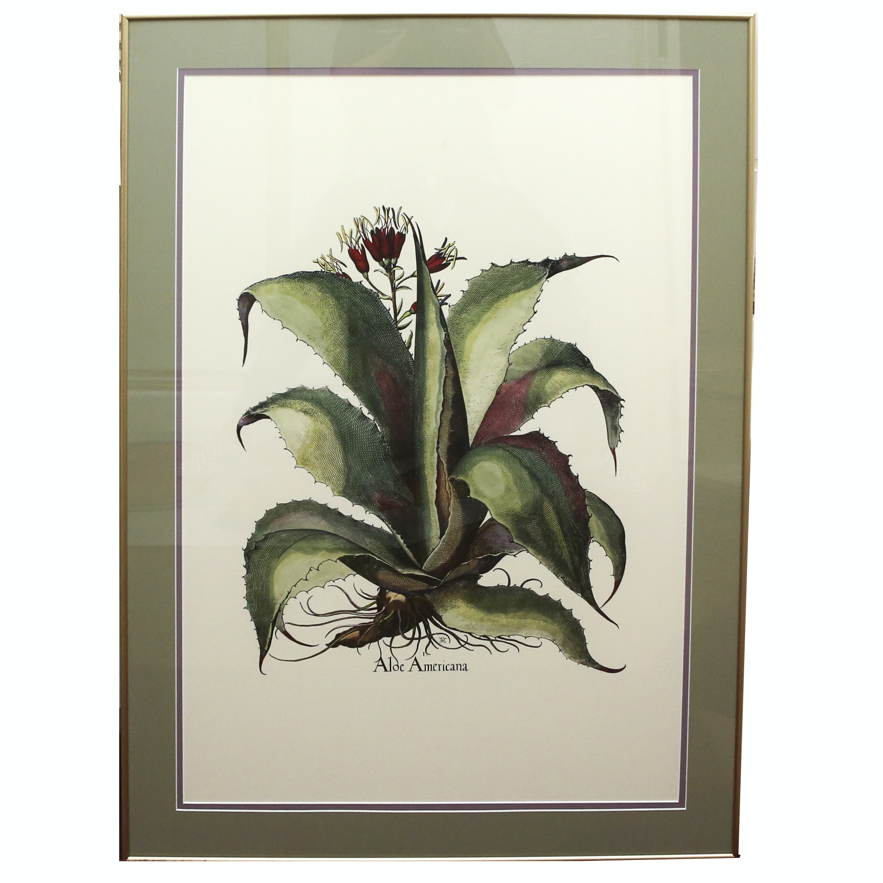 "Framed Giclee on Paper ""Aloe Americana"""