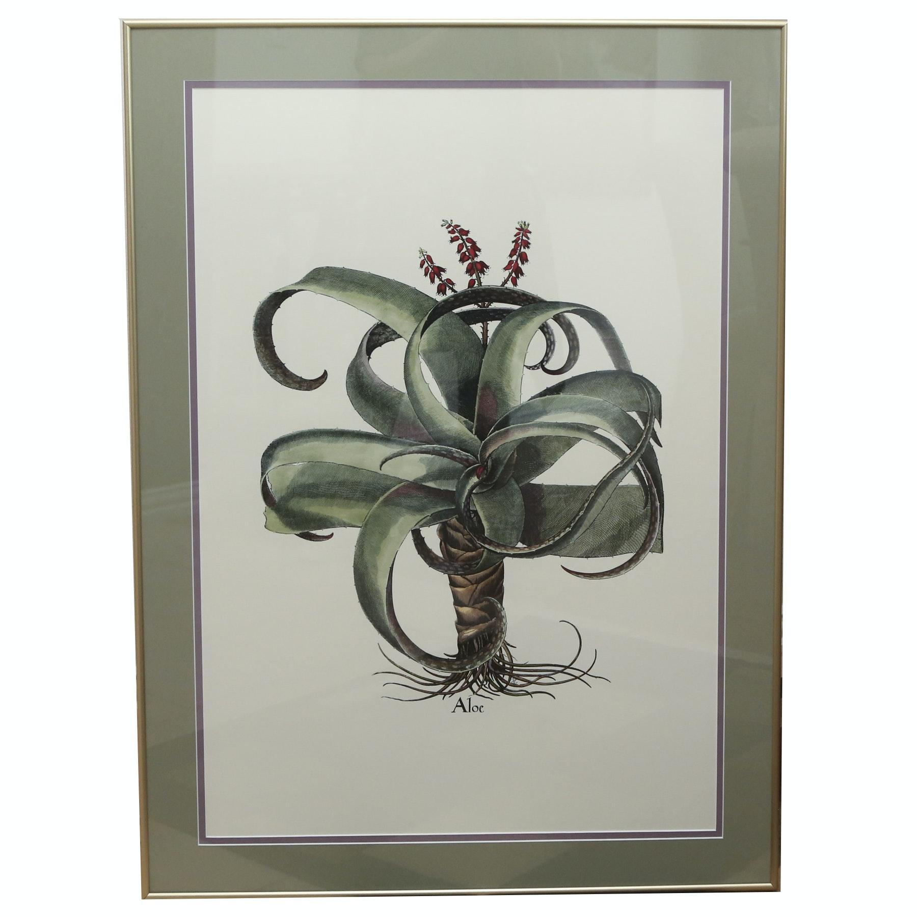 """Framed Giclee on Paper """"Aloe"""""""